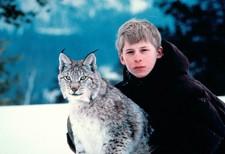 väinö the lynx
