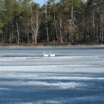 Ice – an unpredictable element